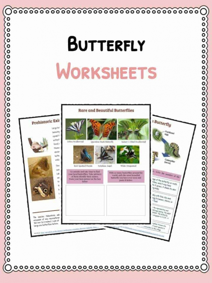 Butterfly Facts  Information   Worksheets For Kids