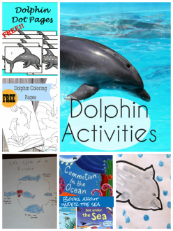 Dolphin Story Starters