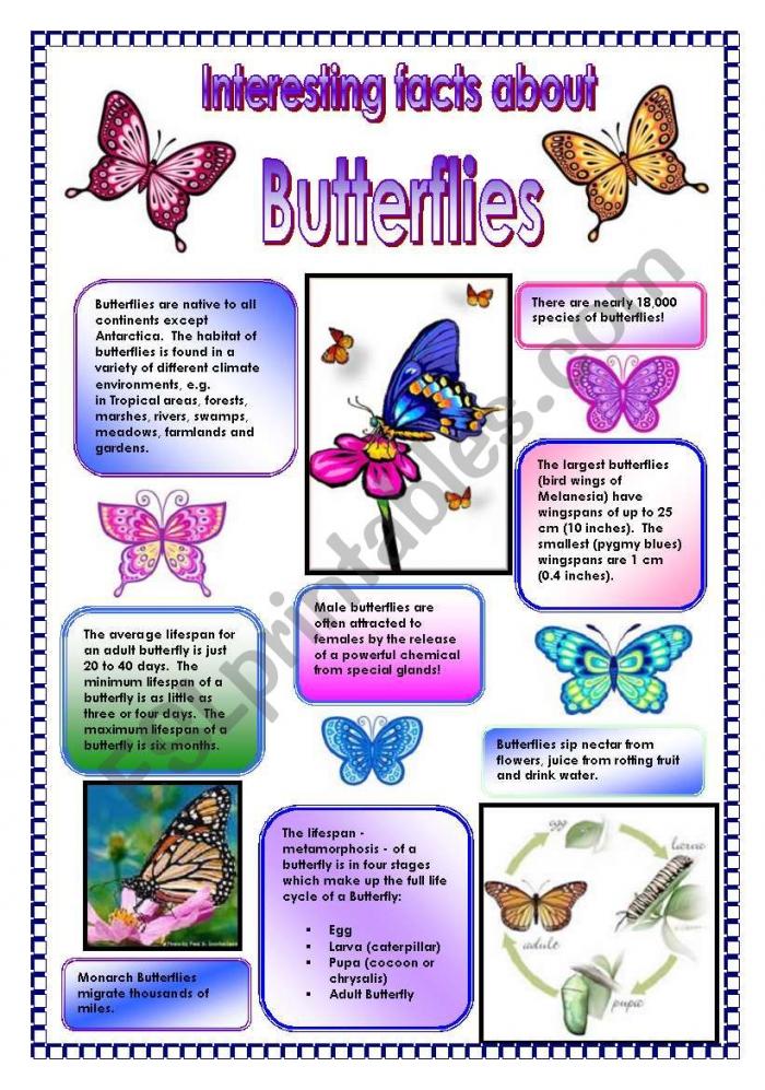 Interesting Facts About Butterflies