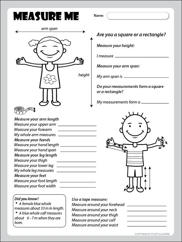 Measurement Activity  Worksheet