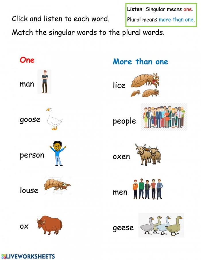 Plurals Irregular Words Interactive Worksheet