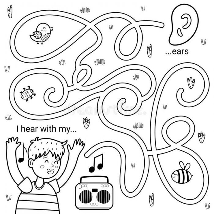 Senses Ears Stock Illustrations   Senses Ears Stock