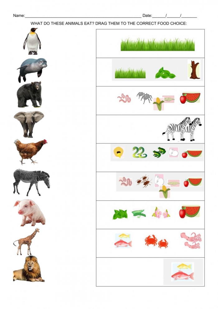What Do These Animals Eat Worksheet