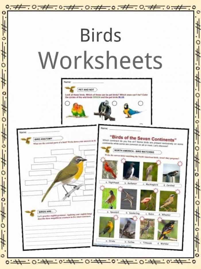 Bird Facts  Worksheets  Habitat  Diet   Information For Kids