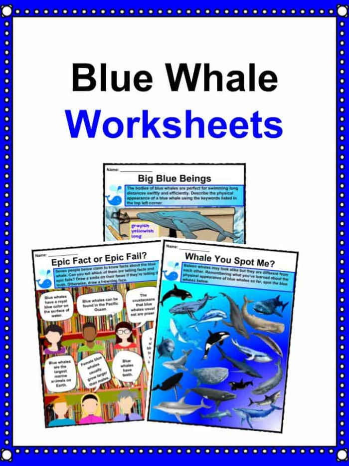 Blue Whale Facts  Worksheets  Habitat  Diet   Information For Kids