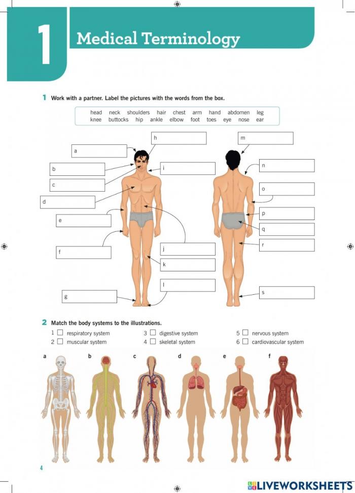 Body Parts Basic Worksheet