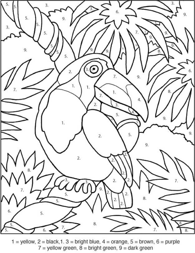 Download Or Print This Amazing Coloring Page Toucan Coloring By