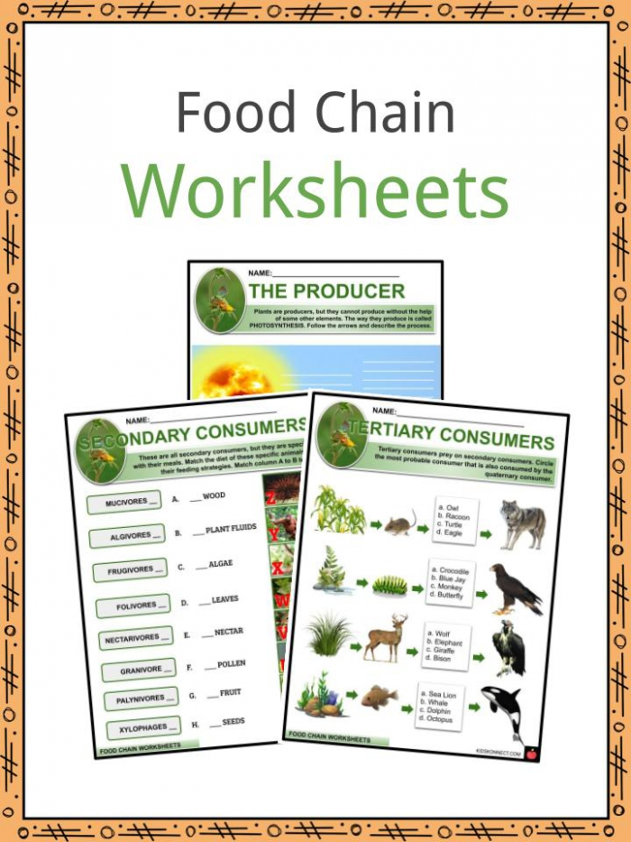 Food Chain Facts  Worksheets   Tale Of Survival For Kids