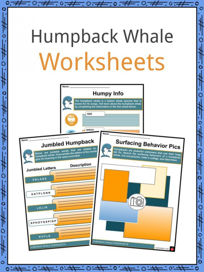Humpback Whale Facts  Worksheets   Anatomy For Kids