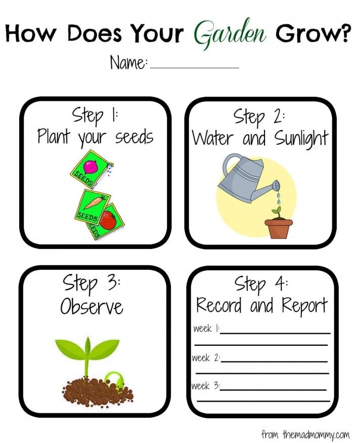 Planting Seeds Worksheet Preschoolplanting Preschool Seeds