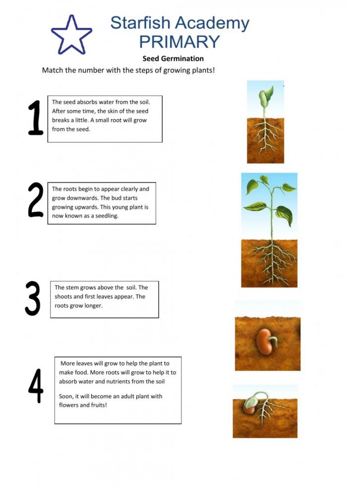 Seed Germination Activity