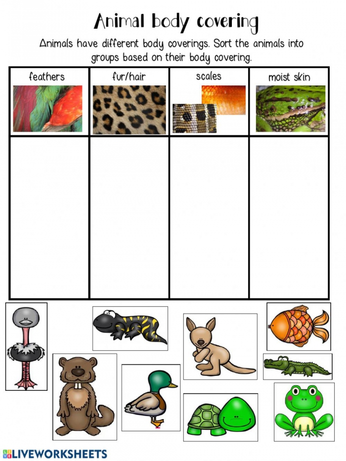 Animal Body Covering Classifcation Worksheet