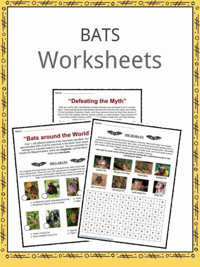 Bat Facts  Worksheets   Habitat Information For Kids