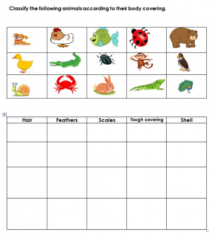 Body Covering Of Animals Worksheet