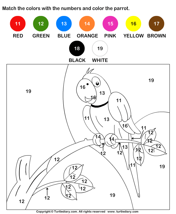 Color The Parrot By Numbers Worksheet