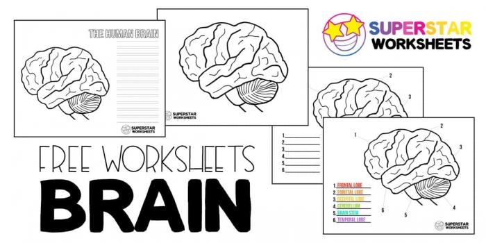 Human Brain Worksheets