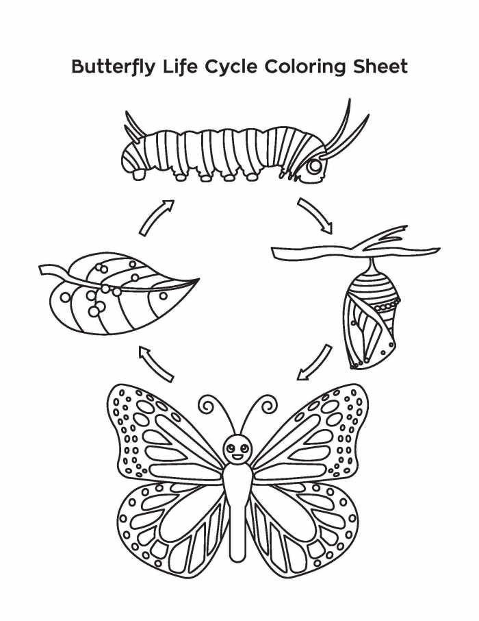 Meeting  Butterfly Life Cycle Coloring Sheet