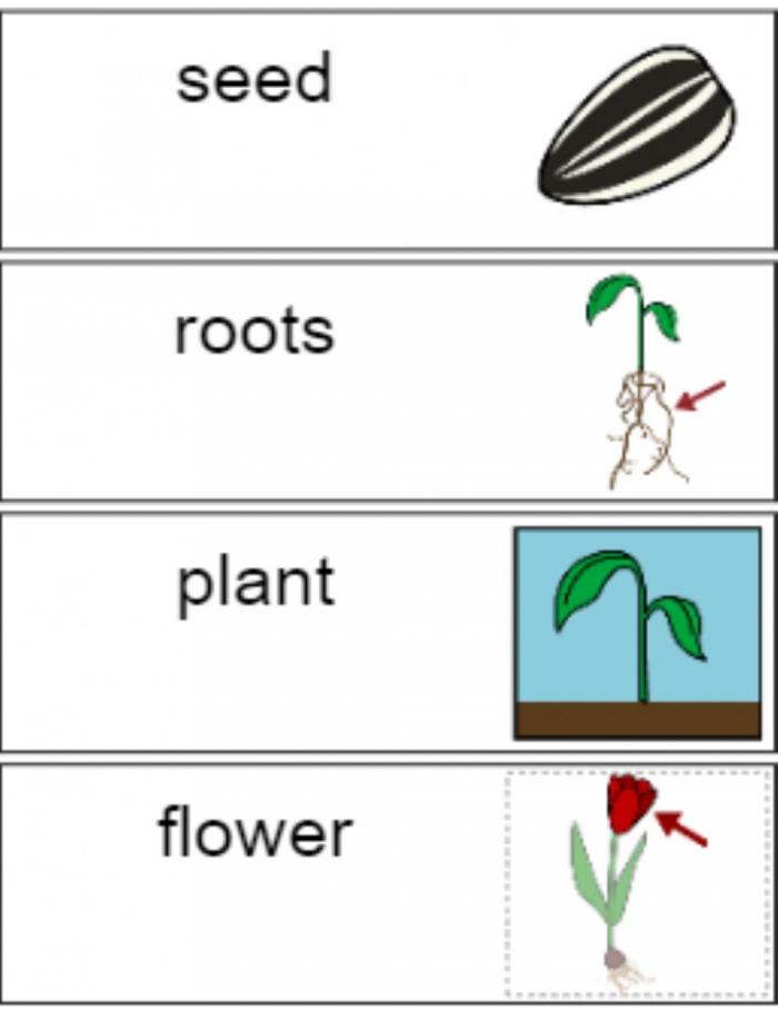 Parts Of A Plant Vocabulary Speaking Exercise Worksheet