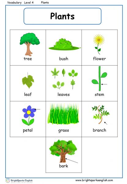 Plants English Vocabulary Worksheet  English Treasure Trove
