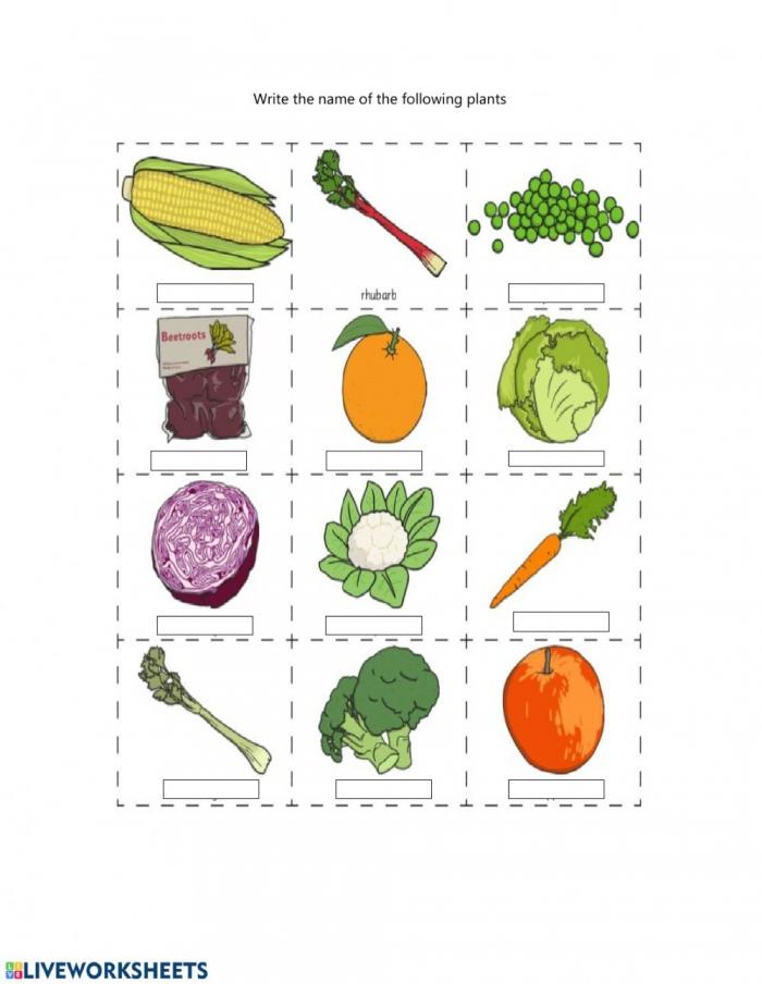 Plants We Eat Worksheet