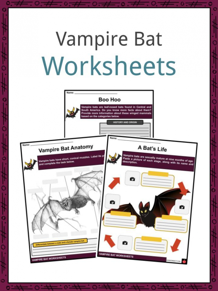 Vampire Bat Facts  Worksheets  Taxonomy   Education For Kids