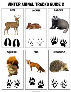 Animal Tracks Guide