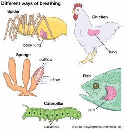Animal Respiratory / Breathing System Worksheets