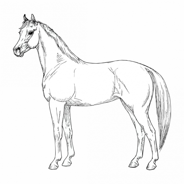 Best Horses Paint By Number Printable