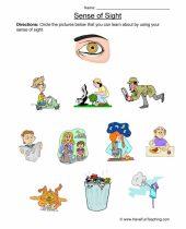 sense of sight worksheets 6