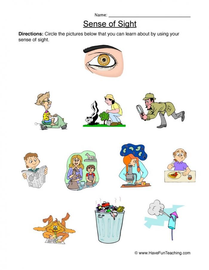 Sense Of Sight Worksheets
