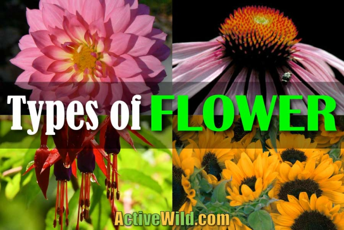 Types Of Flower With Pictures   Examples Free Botany Lesson