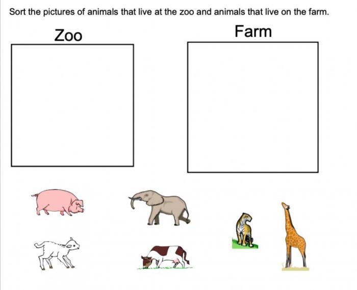 Animal Sort Activity