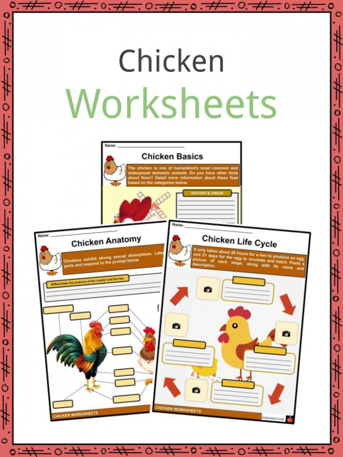 Chicken Facts Worksheets Terminology For Kids