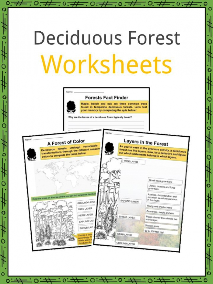 Deciduous Forest Biome Facts Worksheets Information For Kids