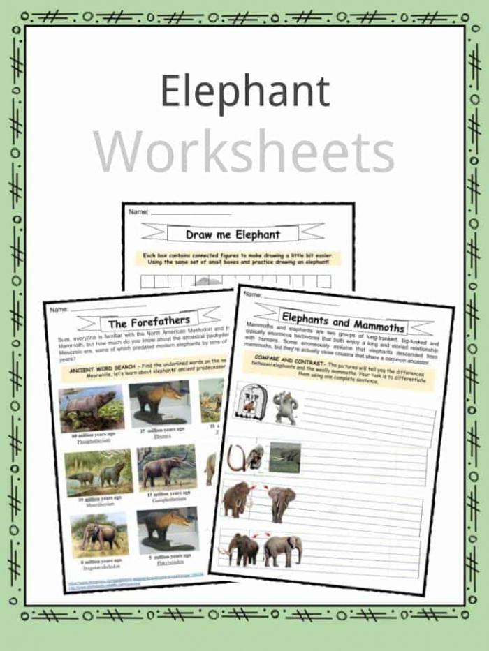 Elephant Facts Worksheets Habitat And Information For Kids