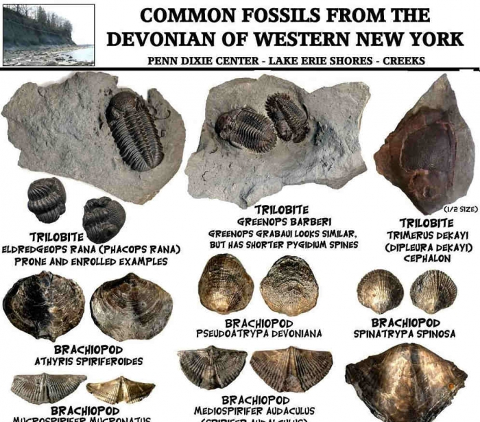 Fossil Identification Sheets