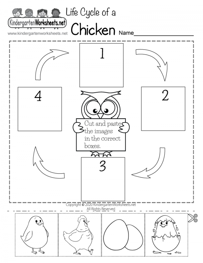Free Printable Life Cycle Of A Chicken Worksheet