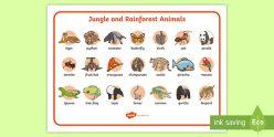 Educational Placemat: Jungle
