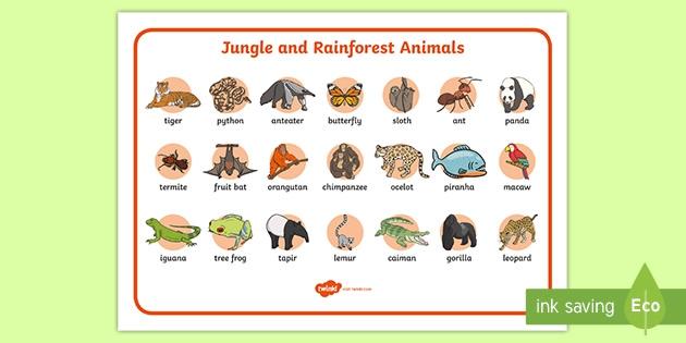 Jungle And Rainforest Word Mat