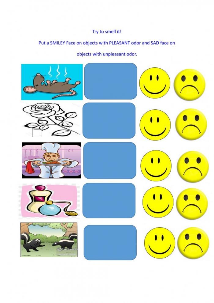 Sense Of Smell Interactive Worksheet