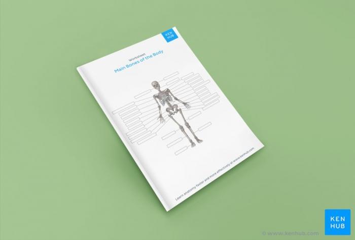 Skeletal System Quizzes Learn Bone Anatomy Fast