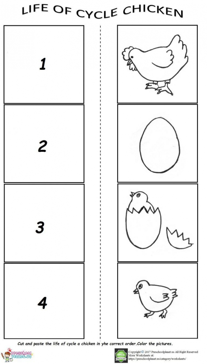 The Life Cycle Of A Chicken Worksheet